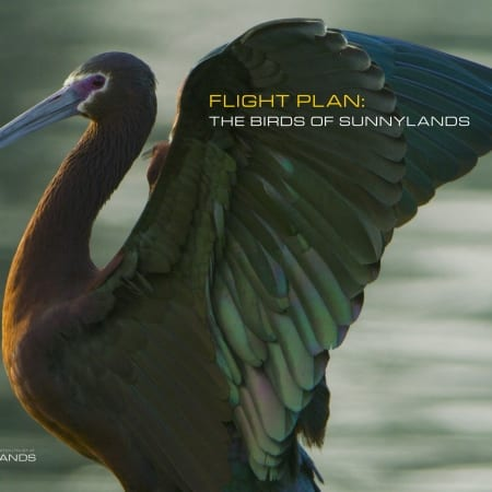 Flight Plan: The Birds of Sunnylands